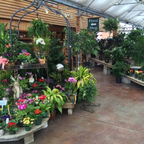 House Plants are in Bloom and in Stock